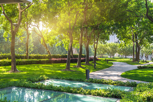 Green is the new grey – the role of plants in greening our cities