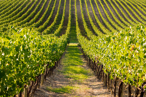 Resilient Wineries